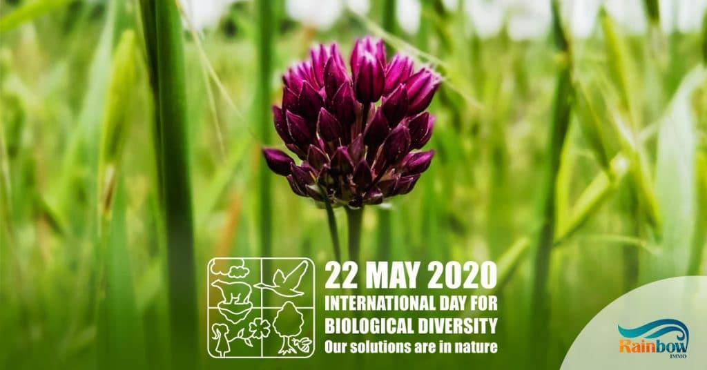 Международный день биологического разнообразия 2020 12
